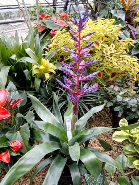 Botanical Gardens 8 by PentaxBro