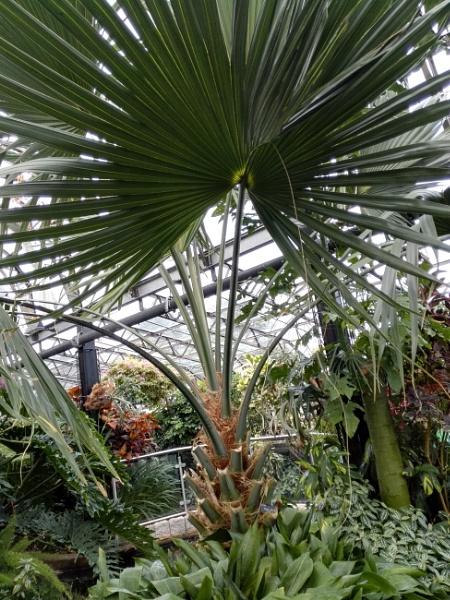 Botanical Gardens 11  by PentaxBro