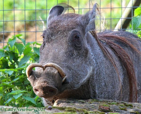 I love my horns. by ladynewbury