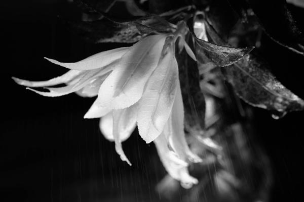 RAIN ON ME by debbieleigh50