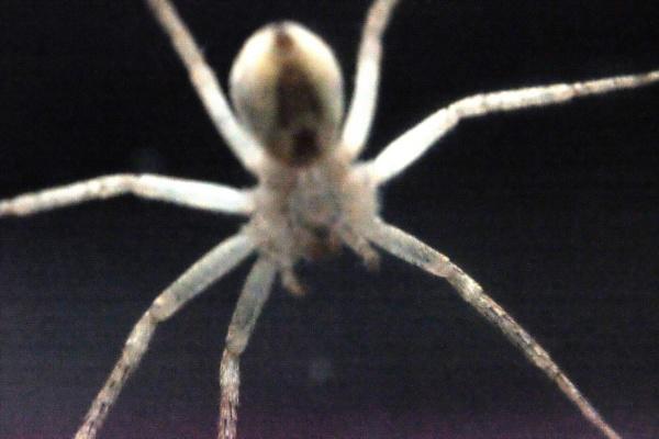 GARDEN SPIDER by debbieleigh50