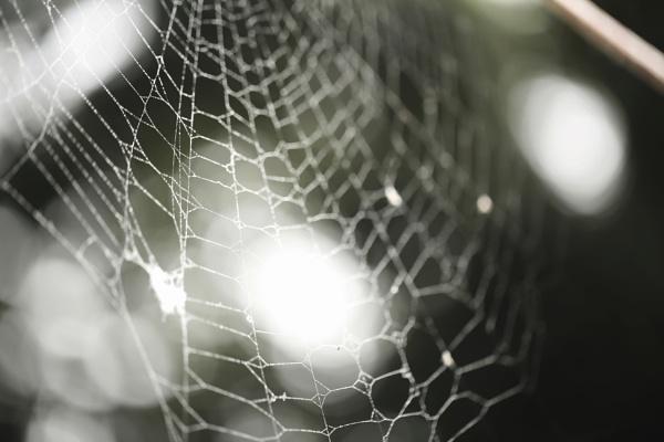 WEB by debbieleigh50