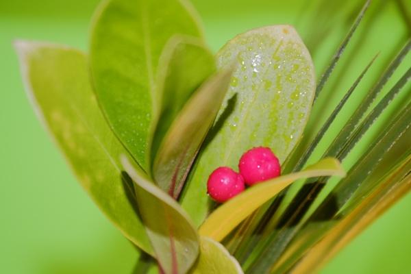 flower berrys by debbieleigh50