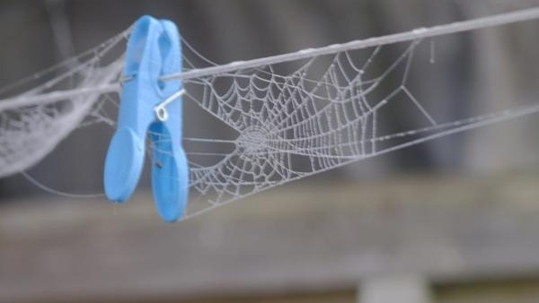 spider peg by debbieleigh50