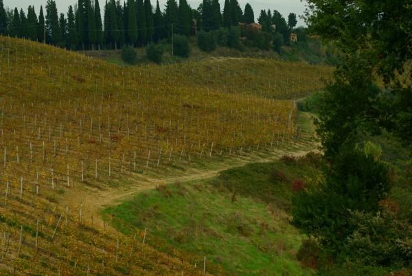 vineyard after harvest by demi63