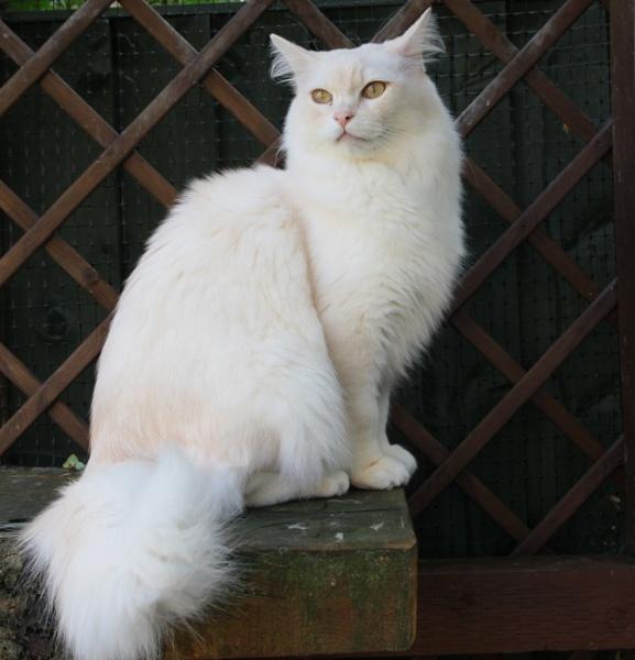 Casper by loves2travel
