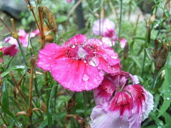 Morning Dew by lindaqharper