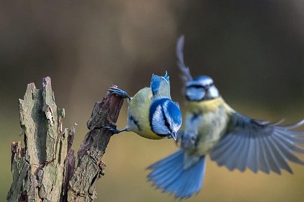 I\'m Off !!! by photographerjoe