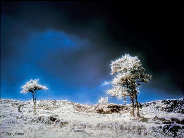 Near Hay Tor. Dartmoor. IR by frenchie44