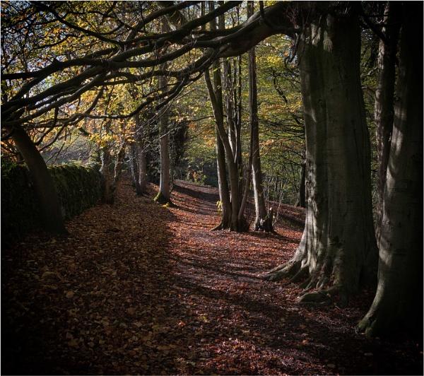 Skipton Castle Woods by KingBee