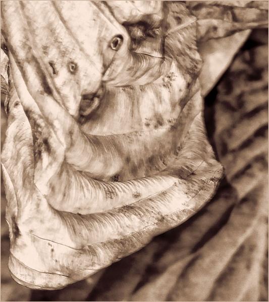 Goblin in the Hosta by Joline