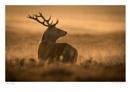 Red Deer by running_man