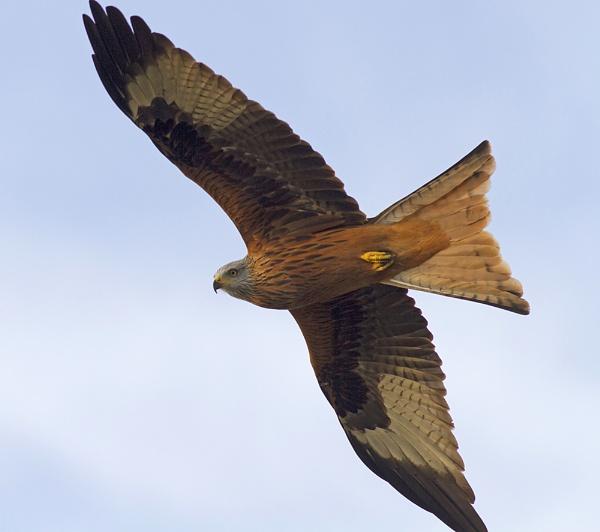 Fly By Kite by lawbert