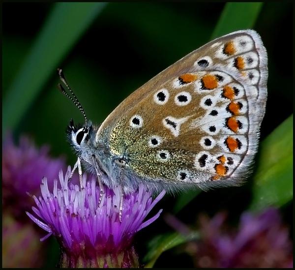 "\""Autumn Butterflies\"". by Badgerfred"