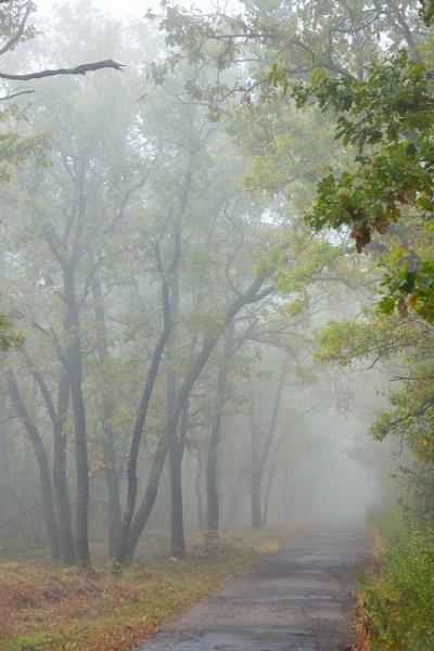 Misty autumnal  forest by jordachelr
