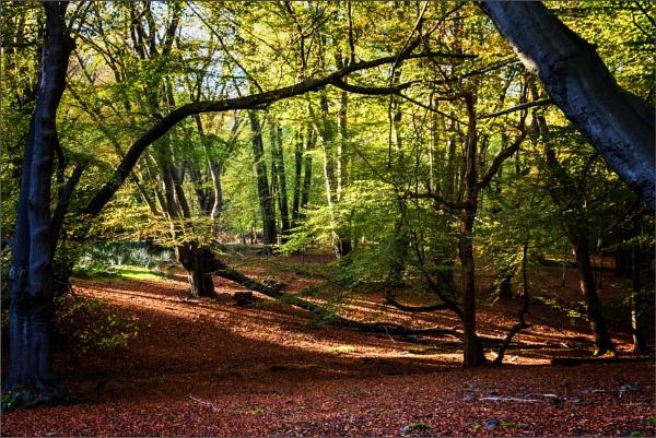 Late afternoon In Warren woods by rambler