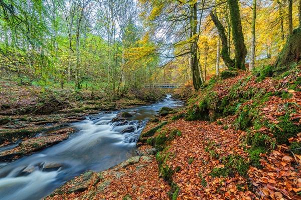Autumn in Aberfeldy by meyeview