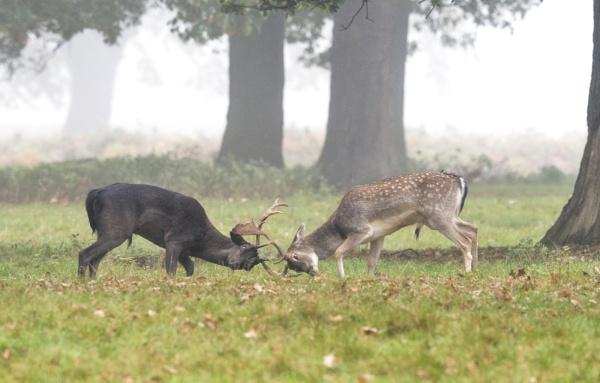 Misty Morning In Bushy Park by hasslebladuk