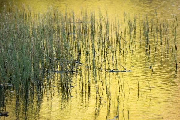 Reflected Gold by jasonrwl