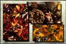 Autumn bounty...... by Niknut