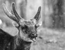 The Laugh by interchelleamateurphotography