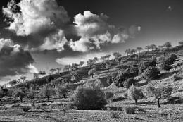 Spanish campo