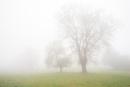 Stanton Moor Trees in the Mist by jamesgrant