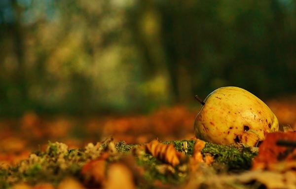 Autumn image by georgiepoolie