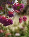 Ruby colours by ColleenA