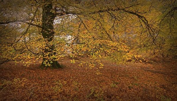 lakeland colour by deavilin