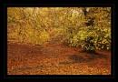 Autumn Gold by deavilin