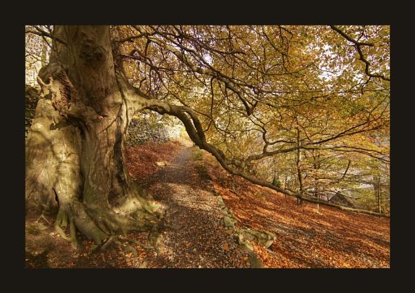 Woodland Light & Shadows by deavilin