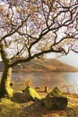 Ullswater colours by deavilin