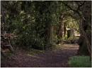 Woodland Path by johnriley1uk
