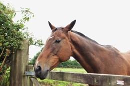 Horse come to say hello