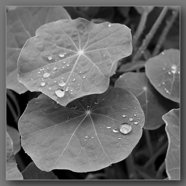 *** Rain drops **** by Spkr51