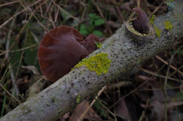 Autumnal Series - Mushrooms & Fungi  by PentaxBro