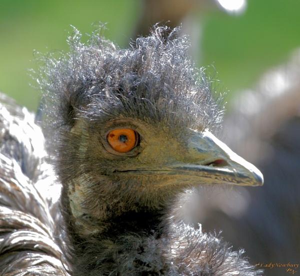 The sun always makes my hair go frizzy! by ladynewbury