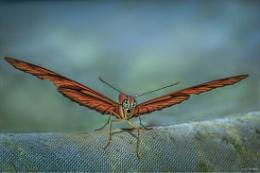 Photo : Julia Butterfly 2
