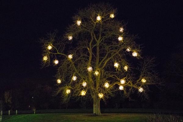 tree lights by sjk123