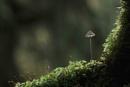 Tiny Mushroom by viscostatic