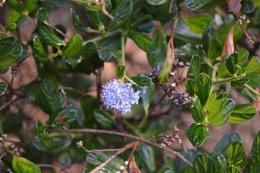 A HEDGEROW FLOWER