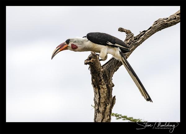 Tsavo West National Park #10 by SteveMoulding