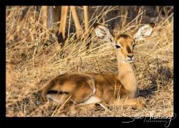 Tsavo West National Park #14