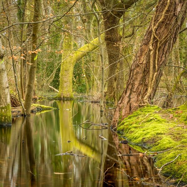 Woodland pool by HelenHiggs