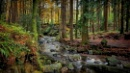 Tollymore Forest by atenytom at 18/11/2017 - 8:26 AM