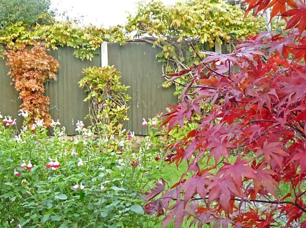 Autumn Colour in my Garden. by Gypsyman