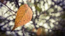 Autumn Leaf by Yogendra