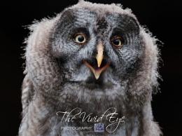 The Happy Little Owl