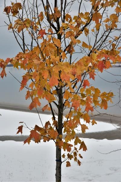 Forgotten leaves by djh698